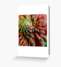 Patterns of Nature, Softness and Light Greeting Card