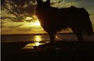 Sunset with Indy by Michael Haslam