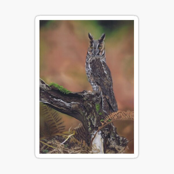 Long earred owl painting in pastel Sticker