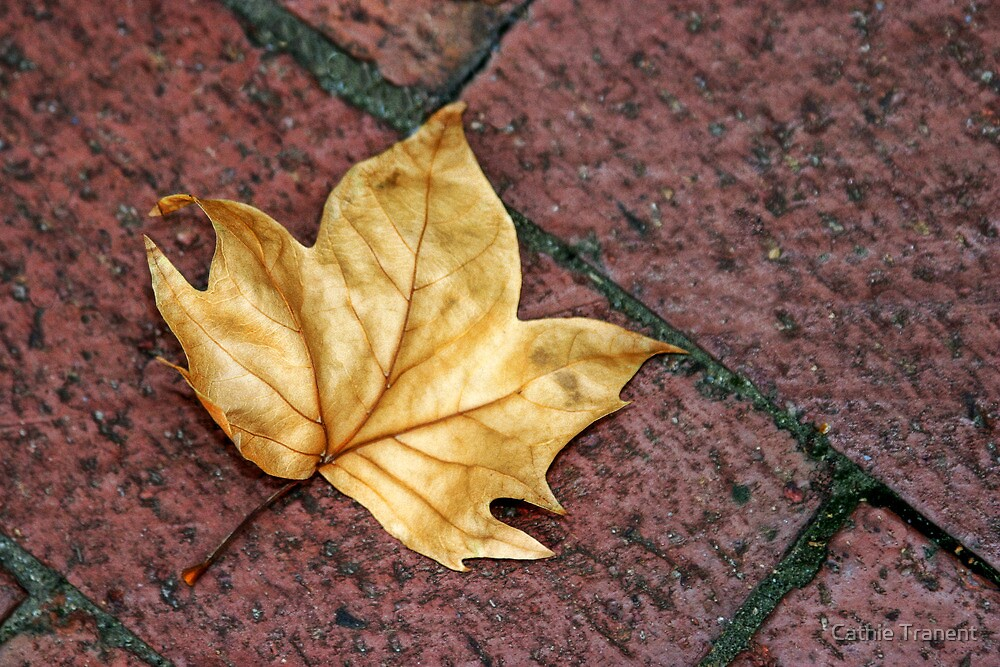 Leaf by Cathie Tranent