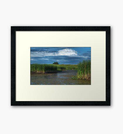 The Wetland Framed Print