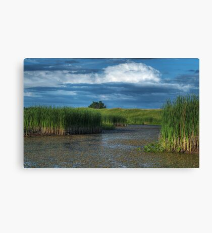 The Wetland Canvas Print