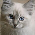 Old Blue Eyes... by Karen  Helgesen
