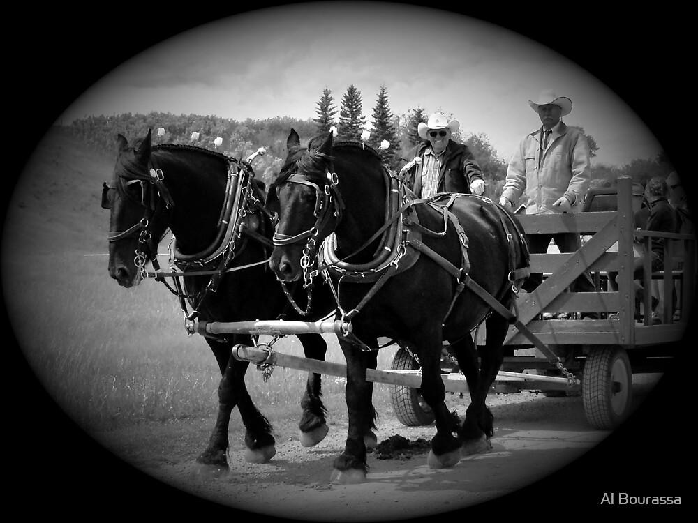 The Black Team II, The Bar U Ranch by Al Bourassa