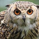 The Eurasian Eagle-owl, Bubo bubo by DutchLumix