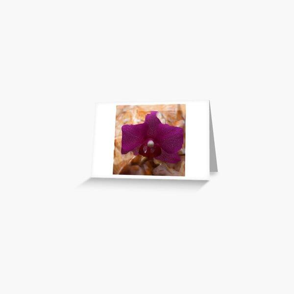 healing shell Greeting Card