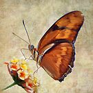 Butterfly on Flower by Savannah Gibbs