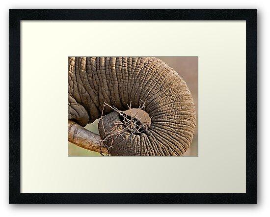 Elephant Pattern by Michael  Moss