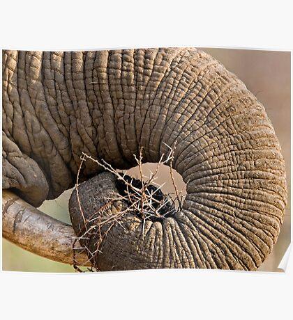 Elephant Pattern Poster