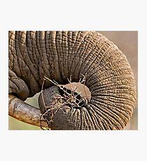 Elephant Pattern Photographic Print