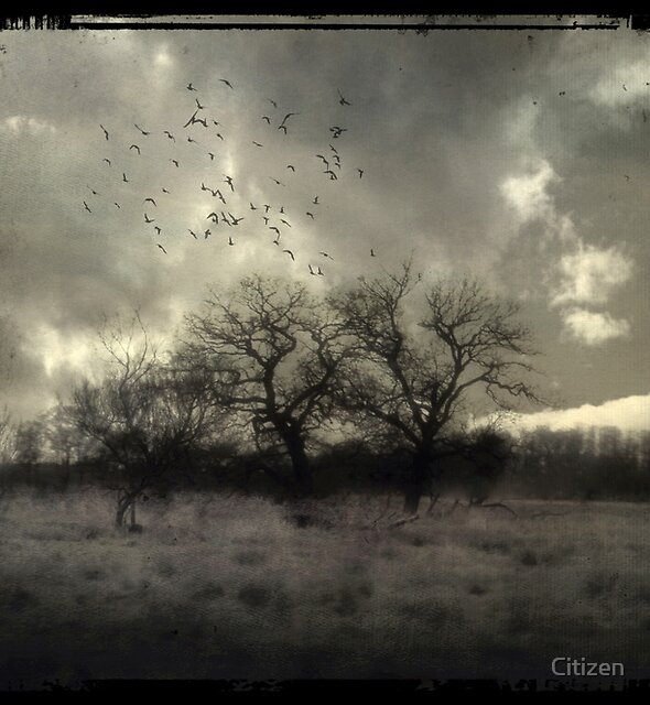 Til the break of dawn by Nikki Smith