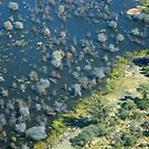 The glorious Okavango Delta in Botswana by Sharon Bishop