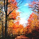 Pocohontas County in Fall by Fred Moskey