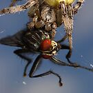 death by a spider by Scott Thompson