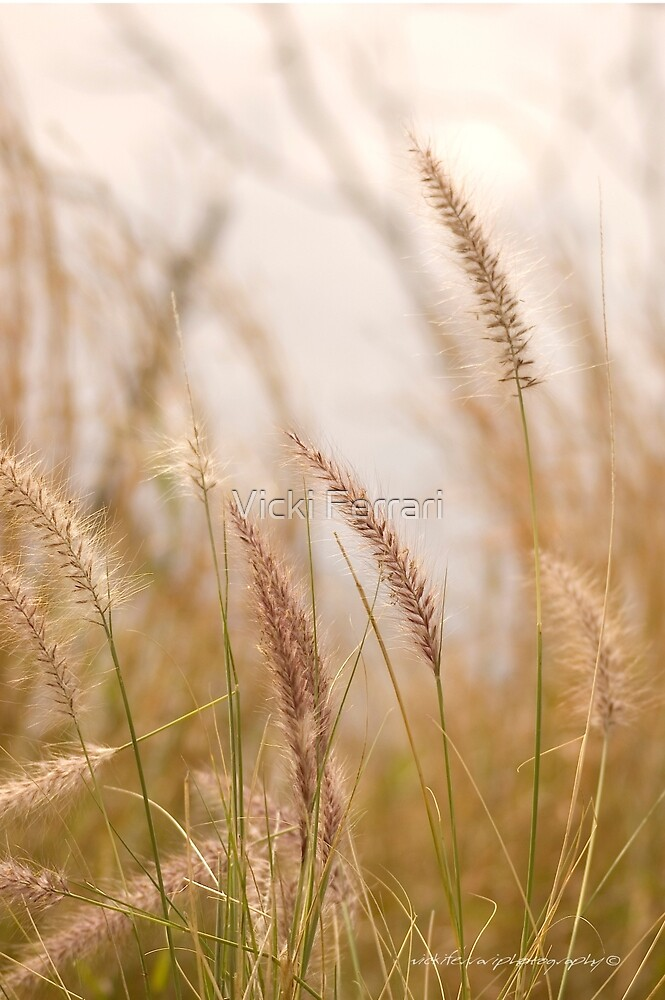 Simply Grass © Vicki Ferrari Photography by Vicki Ferrari