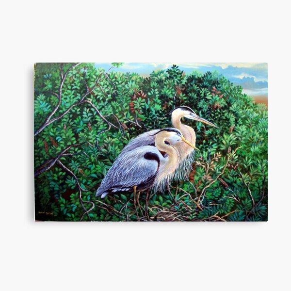 Morning Refuge-Great Blue Heron Canvas Print