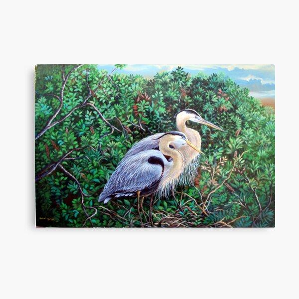 Morning Refuge-Great Blue Heron Metal Print