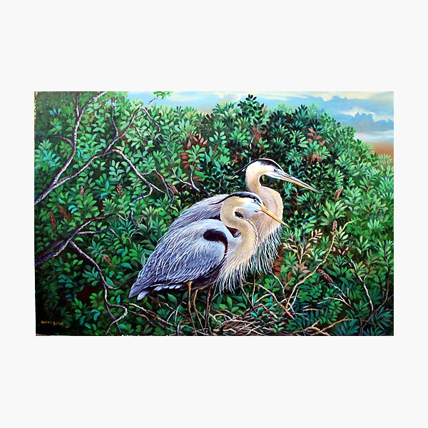 Morning Refuge-Great Blue Heron Photographic Print
