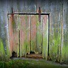 Sad Old Chicken Coop Door by Debbie Robbins