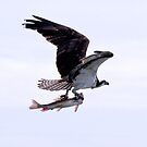 Osprey and Sushi #3 by Carl LaCasse