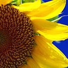 Dazzling Sunflower by Earl McCall