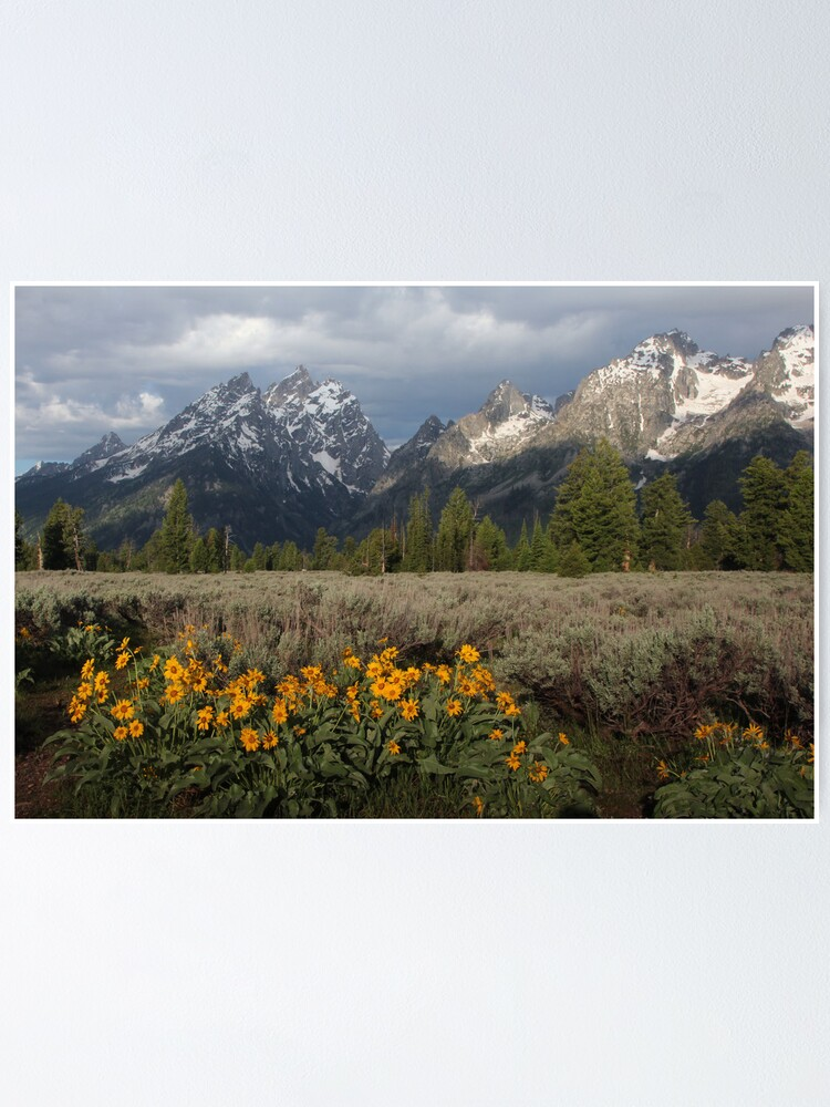 Alternate view of Grand Teton & Mule's Ears Poster
