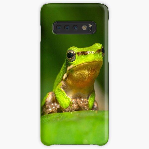 Dwarf Tree Frog, Montville Queensland Samsung Galaxy Snap Case