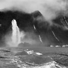Milford Sound Harbour by Peter Hammer