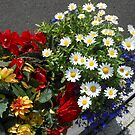 Gänseblümchen, Dahlien, Begonien und Lobelia - Pflanzer Display von BlueMoonRose
