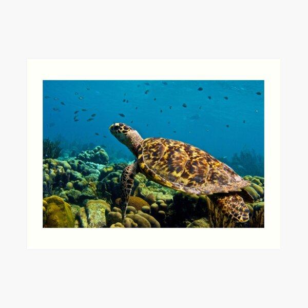 Sea Turtle on Bonaire's Reef Art Print