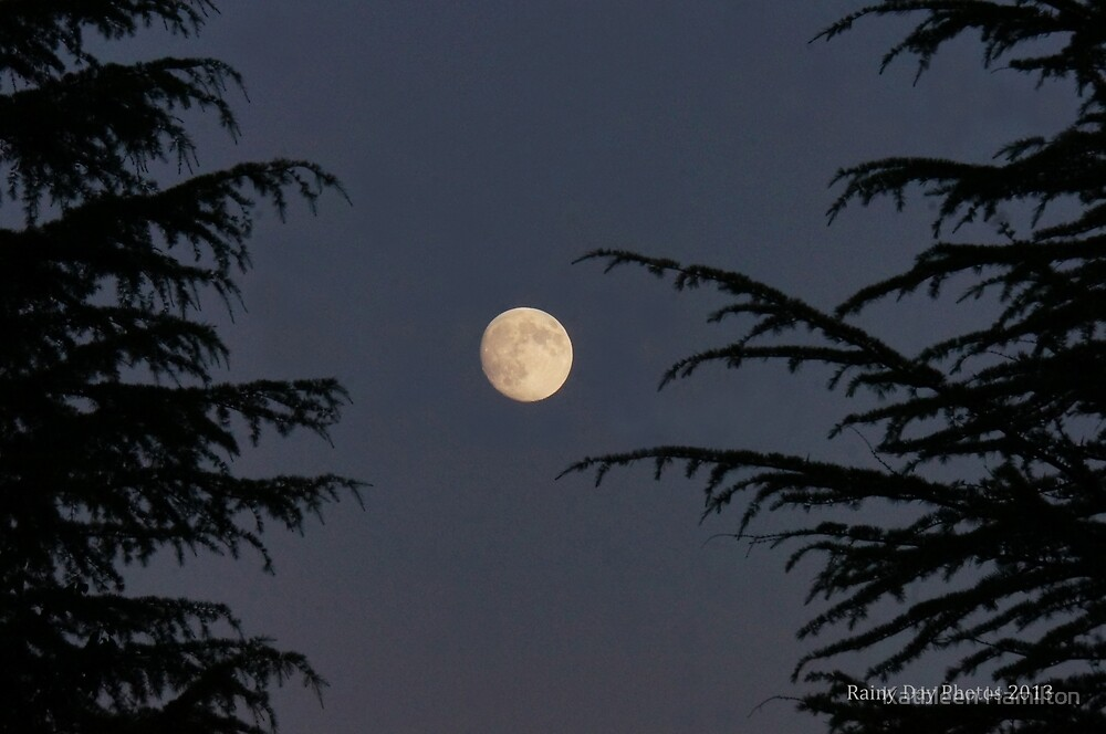 Moonlit night by Rainydayphotos