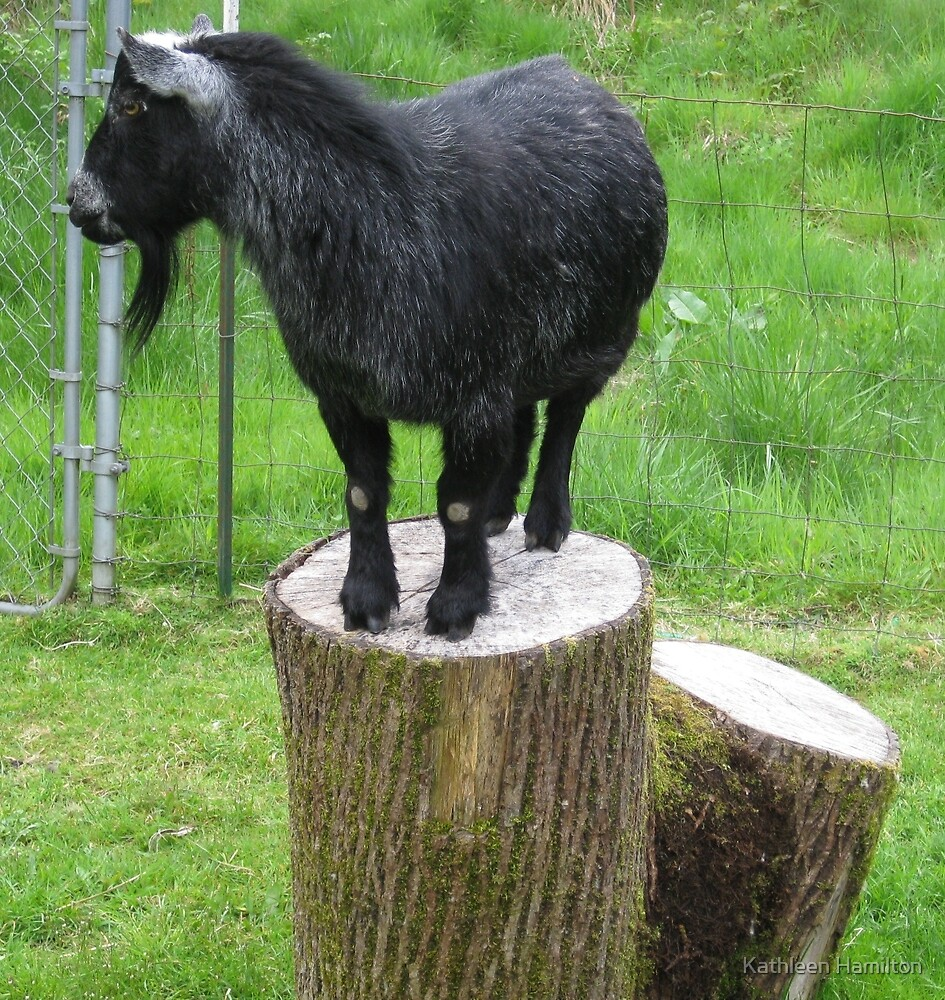 King of the stump by Rainydayphotos