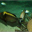 Underwater world by Janone