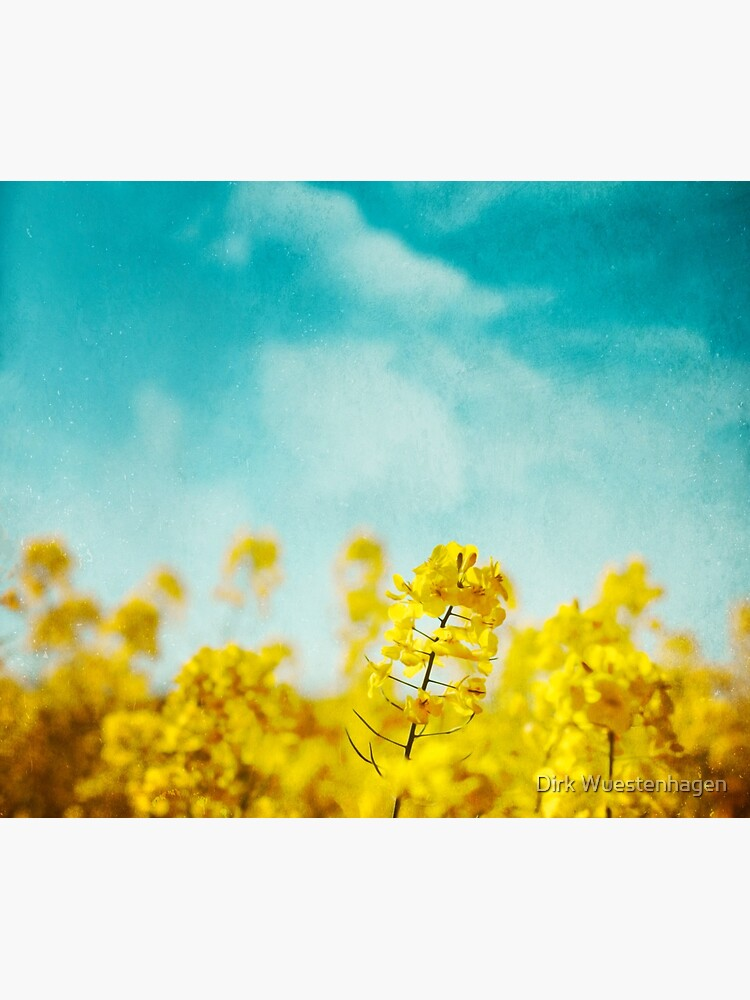 Spring Time - Blooming Rapeseed flowers by DyrkWyst