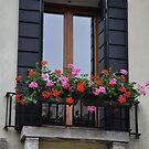 window box by Karen E Camilleri