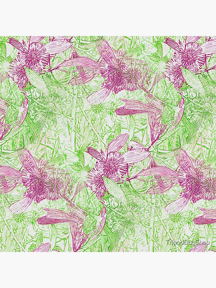 Hakea, Pink and Green by TripodDogShop