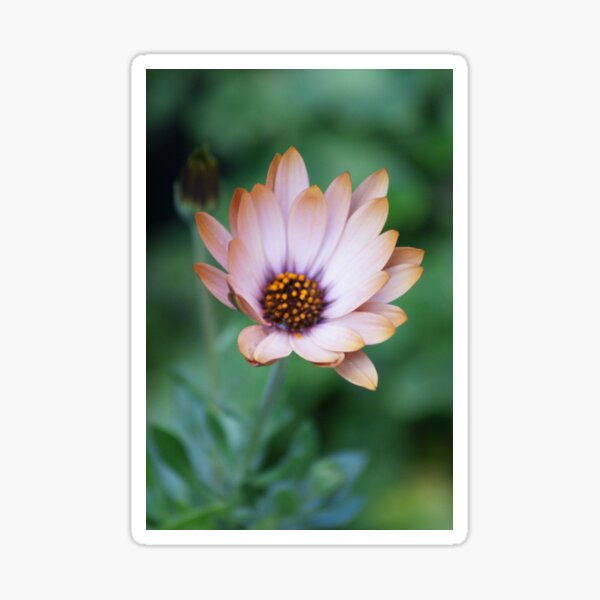 For Eva; Wat Garden, La Mirada, CA USA Sticker