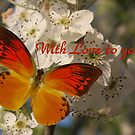 With love to you... by Coloursofnature