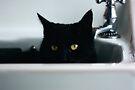 Puss-in-Sink by inkedsandra