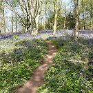 Bluebell Pathway by CreativeEm