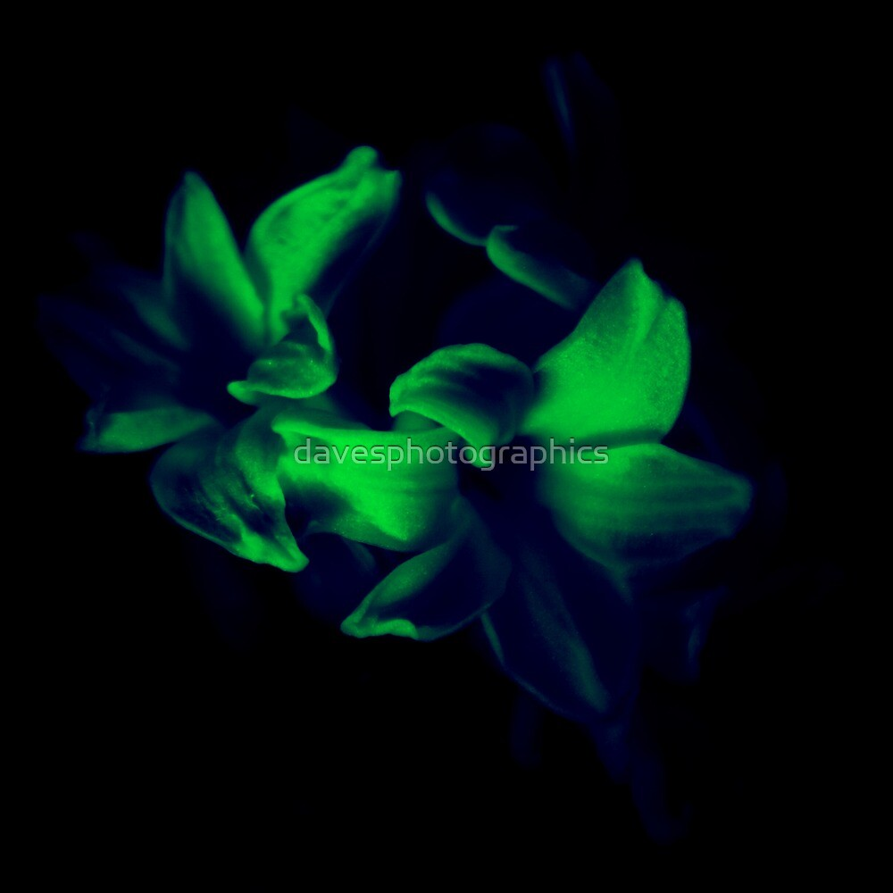 Green Flower by davesphotographics