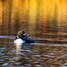 The Loon by Kathy Weaver