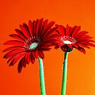 Red Flowers by RoleyShop