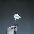 Photo of Person Holding White Flower by thed4rkestrose