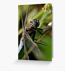 Chaser close -up Greeting Card