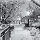 Marlborough Street Winter Whites by Owed To Nature