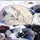 Creature Comforts - arctic fox by ferinefire