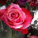 Red Rose by thed4rkestrose