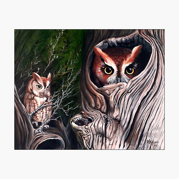 Sentinels -  Eastern screech owls Photographic Print