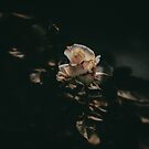 White Flower by thed4rkestrose
